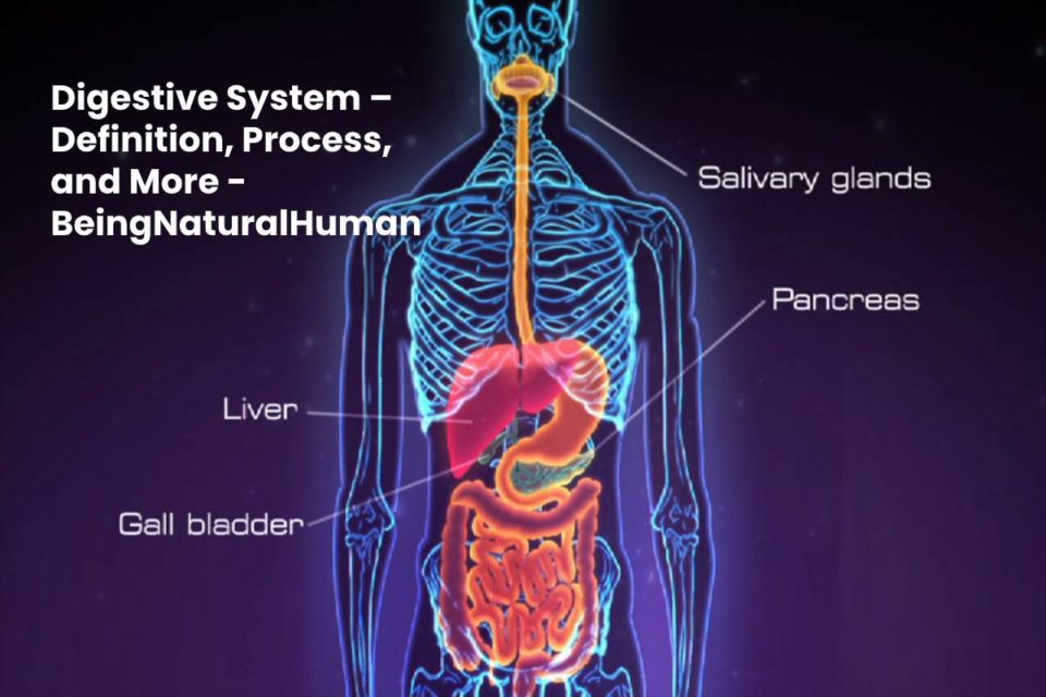 Digestive System – Definition, Process, and More - BeingNaturalHuman