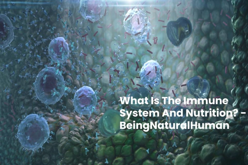 What Is The Immune System And Nutrition? - BeingNaturalHuman
