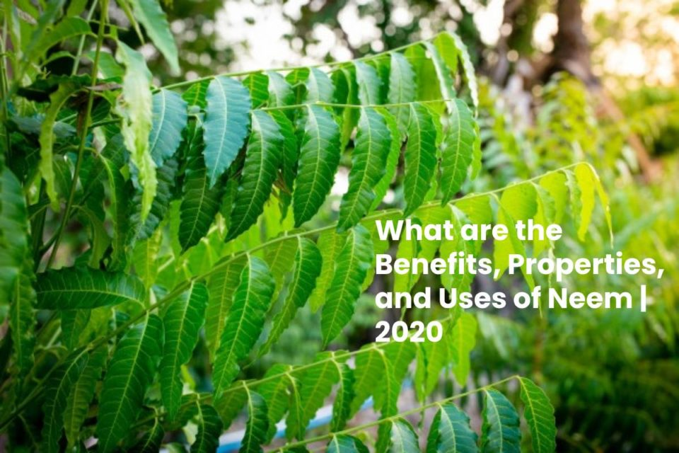 What are the Benefits, Properties, and Uses of Neem | 2020
